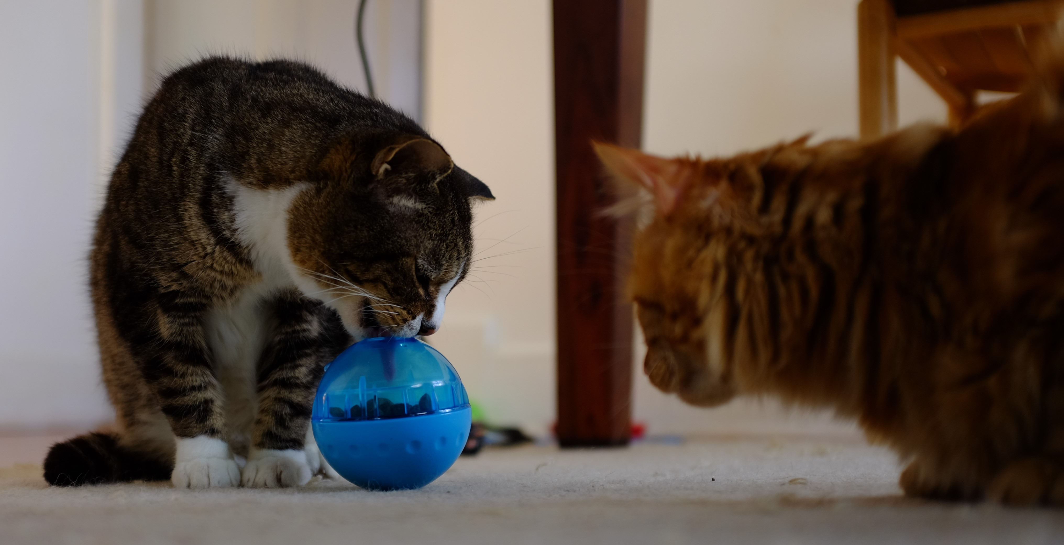 cats for feeder slow interactive thin cat